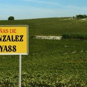 Gonzalez Byass Vineyards