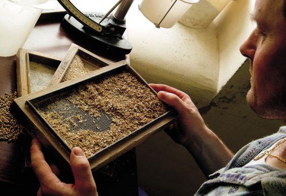 Glenfarclas barley