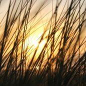 Kilchoman sunset